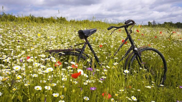 Bike-in-Wildflower-Meadow