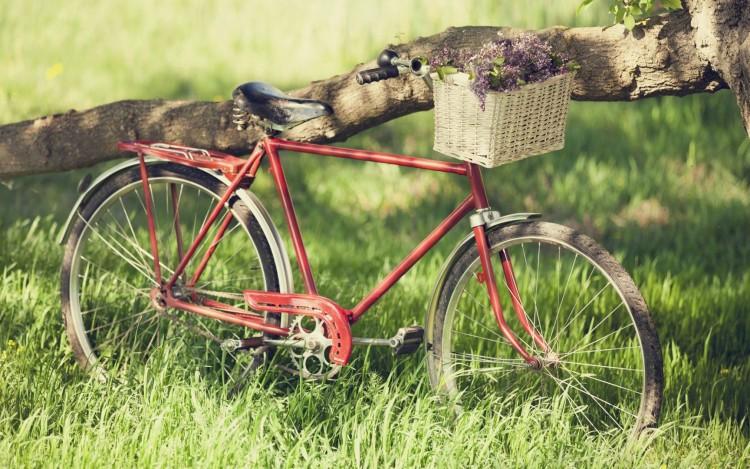 nastroenie-velik-velosiped-bajk-kolesa-spicy-trava-zelen-leto-vesna-radost-kanikuly-svoboda-mechta-romantika-progulka-poezdka-piknik-cvety-krasnyj-derevo-stvol-kora-rama-bukety-hd-wallpapers-krasivye