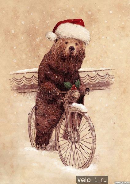 Медведи на велосипеде003
